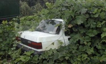 car_plants.jpg
