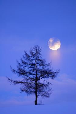moon_tree.jpg
