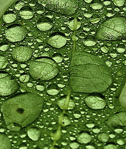 leaf_droplets.jpg