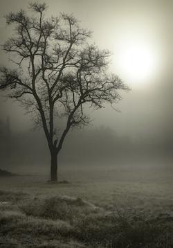 frosty_tree.jpg